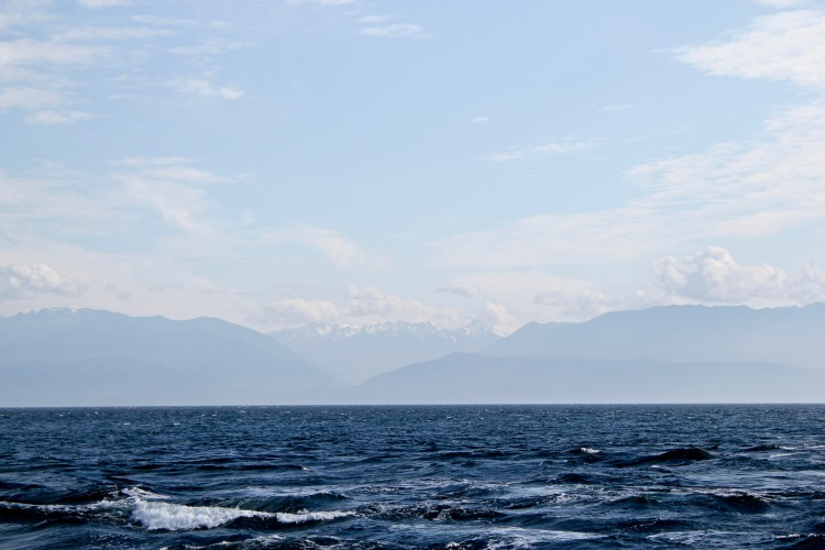 Whale Watching in British Columbia, Canada   One Chel of an Adventure