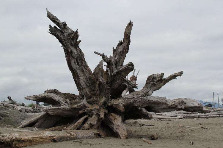 Fallen Roots First Beach | One Chel of an Adventure