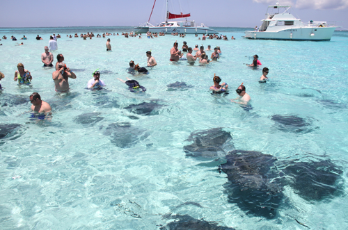 tourists_with_stingray_credit_guy_harvey-2
