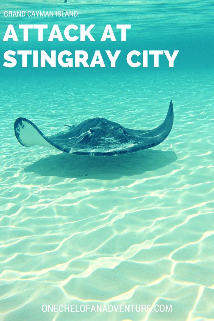 Attack at Sting Ray City, Grand Cayman