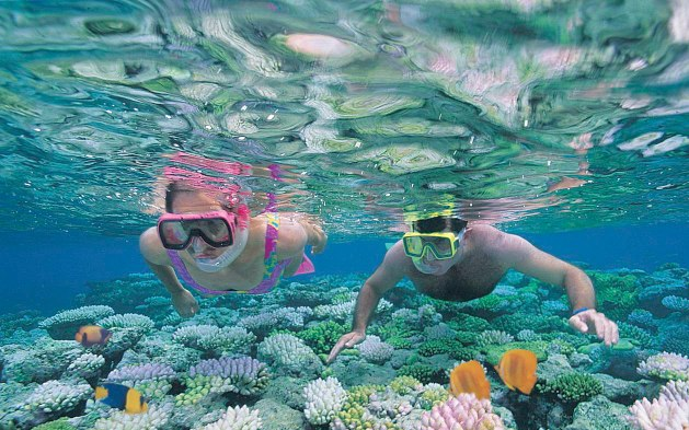 Cairns Top 5: Great Barrier Reef