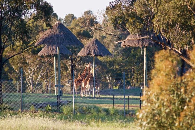 Taronga Western Plains Zoo: A Wild Weekend Getaway From Sydney