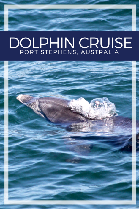 Dolphin Cruise in Port Stephens, Australia