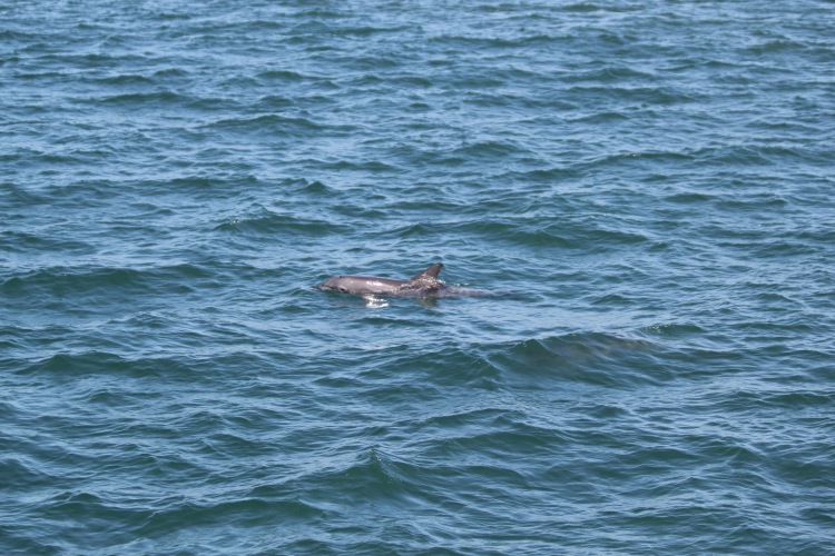 port-stephens-dolphin-tour