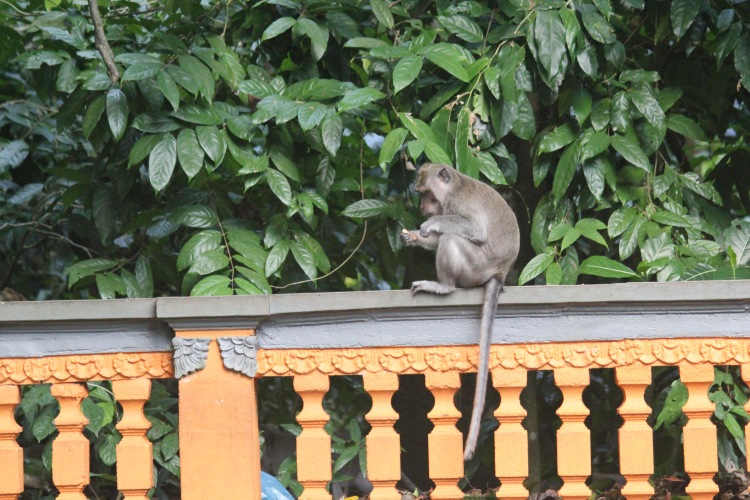 Memoirs from the Monkey Forest | Bali, Indonesia Must Do